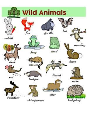 apprendre les animaux en anglais
