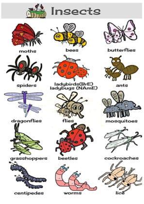 connaitre les insectes en anglais
