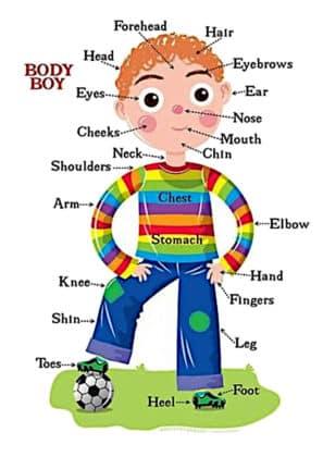 connaitre les parties du corps en anglais