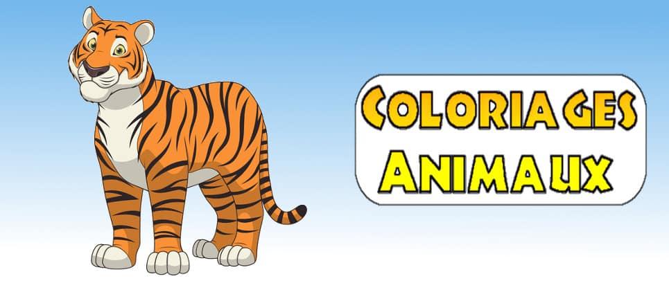dessin de tigre à imprimer