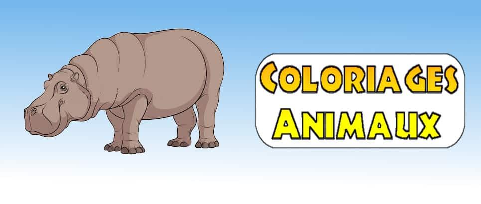 dessin animaux facile