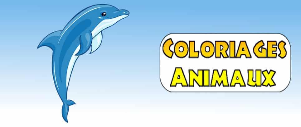 image de dauphin a imprimer gratuitement