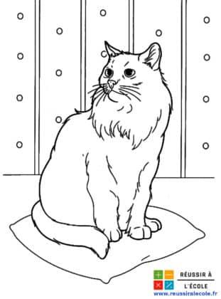 coloriage chat à imprimer