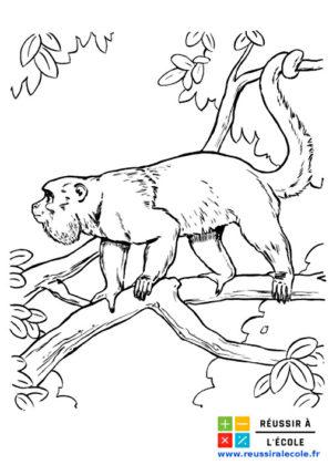 dessin animal