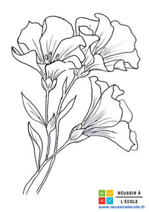 dessin de fleur