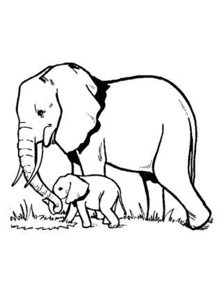 dessin elephant facile