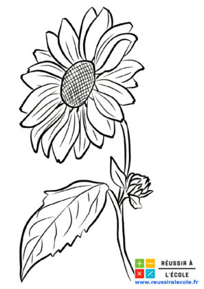dessin fleur facile