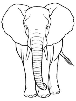 elephant dessin facile