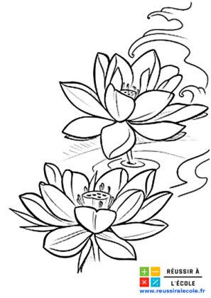 fleur de lotus dessin