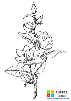fleur dessin facile