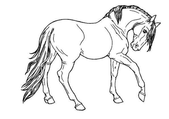 cheval coloriage