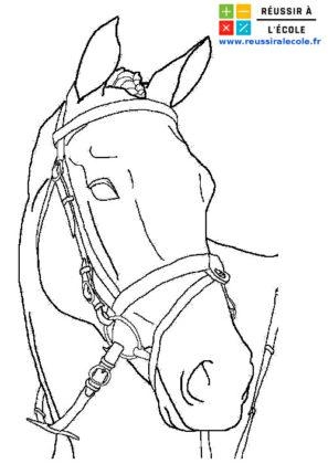 coloriage cheval