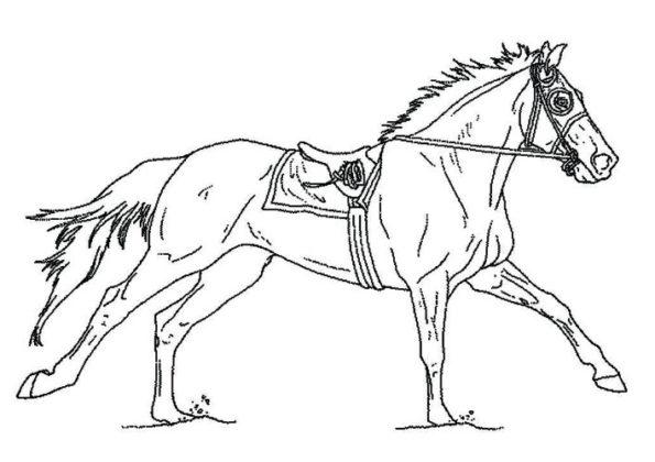 coloriage de cheval