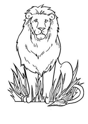 coloriage de lion
