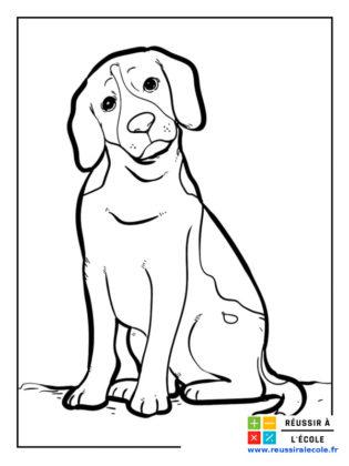 coloriage labrador