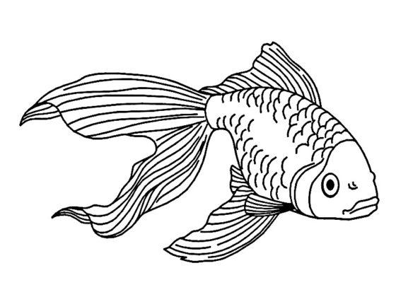 coloriages poissons