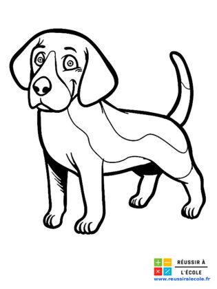 image de chien