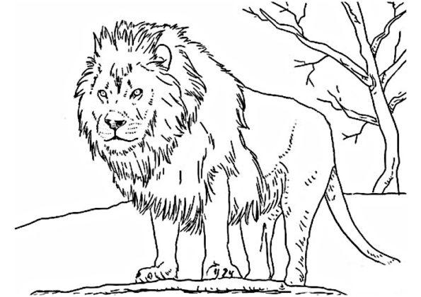 lion coloriage