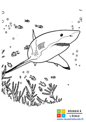 coloriage requin