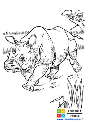 coloriage animaux sauvages
