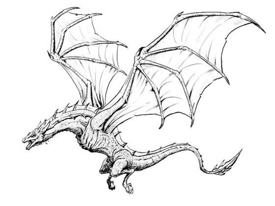 dragon à colorier