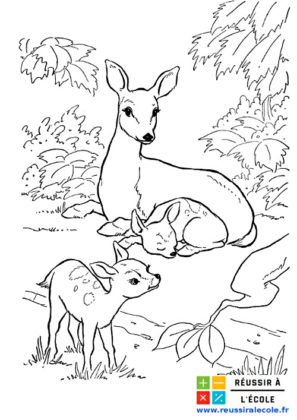 image animaux