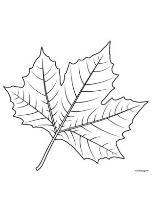 image d automne