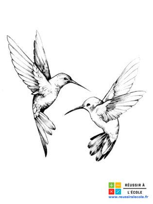 coloriage adulte oiseau
