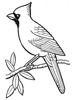 coloriage d oiseau