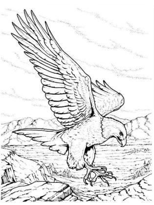 coloriage de oiseau