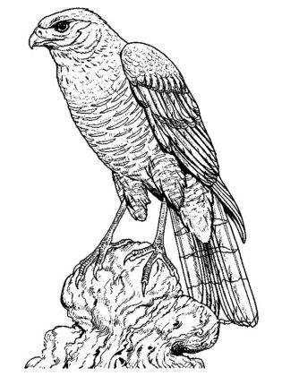 coloriage oiseau adulte