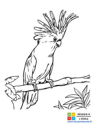 coloriage oiseaux exotiques