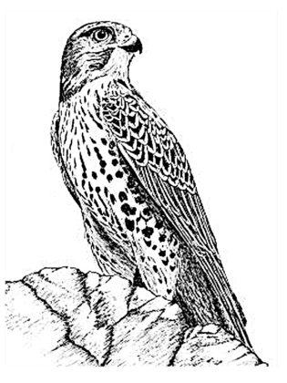 oiseau coloriage